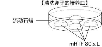 小鼠生殖工程学技术——2精子复苏