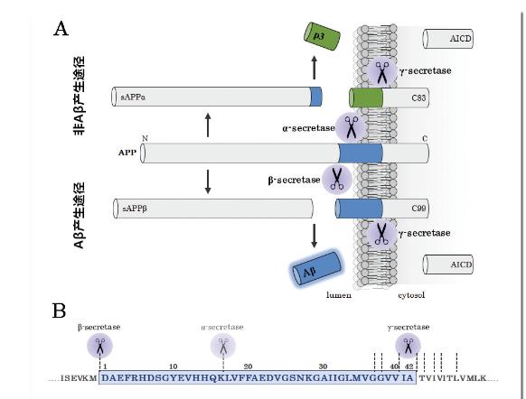 阿尔茨海默症β-淀粉样蛋白