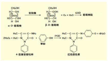α-葡萄糖苷酶活性抑制检测试剂盒的开发