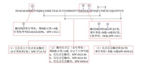 重组赖氨酰肽链内切酶rLys-C