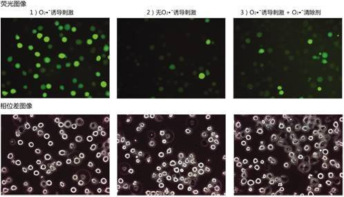 过氧化氢特异性荧光探针BES-H2O2(Cell-impermeant)-WAKO和光纯药