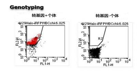 ES细胞・iPS细胞培养用血清代替物-WAKO和光纯药