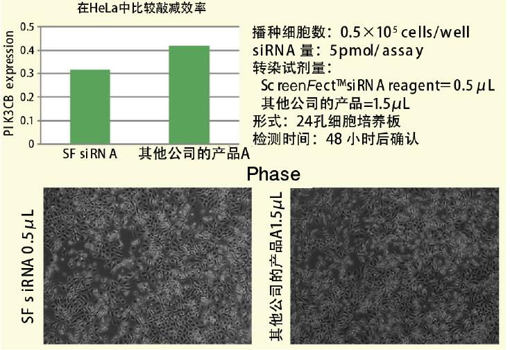 高性能基因导入试剂ScreenFect™ siRNA转染试剂 -WAKO和光纯药