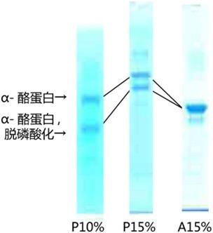 Phos-tag(TM) (50μmol/l), 7.5%,12.5%丙烯酰胺预制胶,适用于伯乐电泳槽-价格-厂家-供应商-广州波柏贸易有限公司
