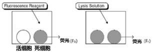 细胞毒性氟检测(FACLS法)细胞毒性荧光测定试剂盒  -价格-厂家-供应商-上海金畔生物科技有限公司