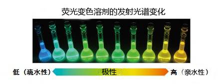 POLARIC™活细胞荧光变色溶剂-价格-厂家-供应商-上海金畔生物科技有限公司