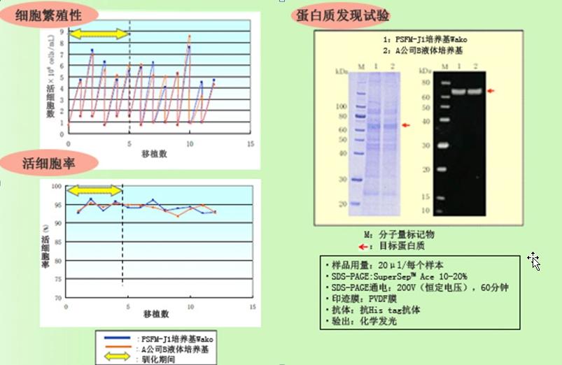 PSFM-J1 昆虫细胞培养培养基 液体 -价格-厂家-供应商-广州波柏贸易有限公司