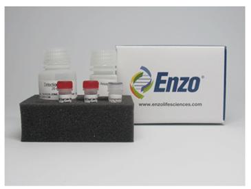 溶酶体细胞毒理检测试剂盒 (红色荧光)(绿色细胞系)(微孔板)-价格-厂家-供应商-上海金畔生物科技有限公司