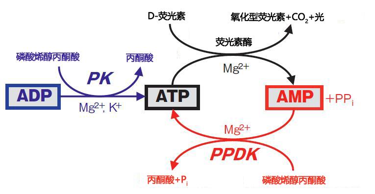 ATP荧光检测仪Lumitester Smart-Kikkoman ATP荧光检测仪-wako富士胶片和光