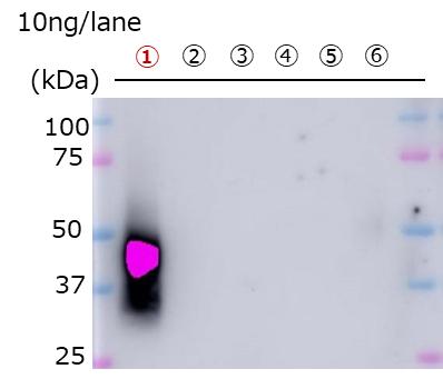 外泌体,COLO201细胞来源,纯化物-试剂盒-wako富士胶片和光