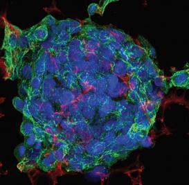 Alvete™ 3D细胞培养系统-细胞培养板-wako富士胶片和光